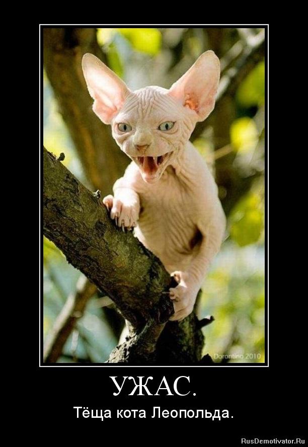 про кота Леопольда