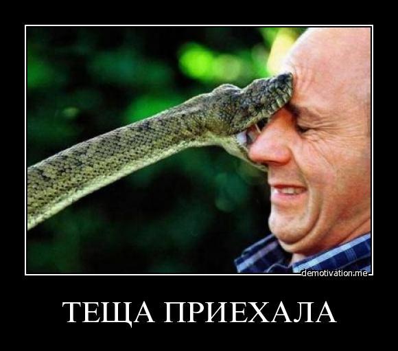 Теща приехала - змея