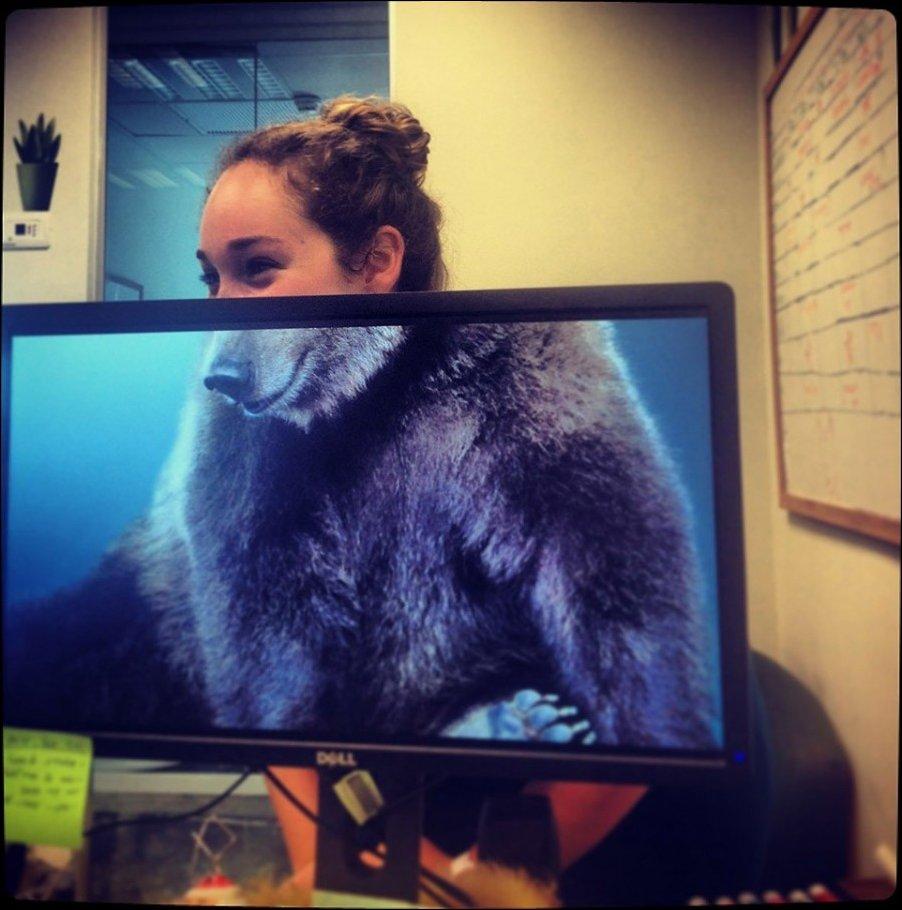 мишка в офисе, какой хитрый медведь