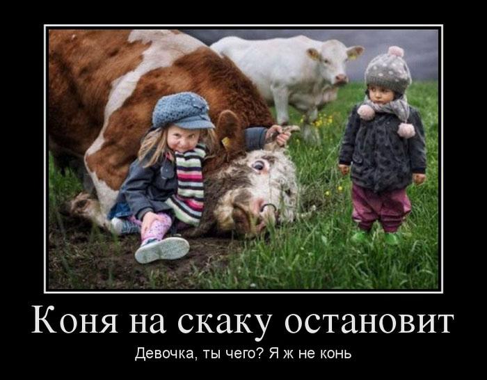 я корова