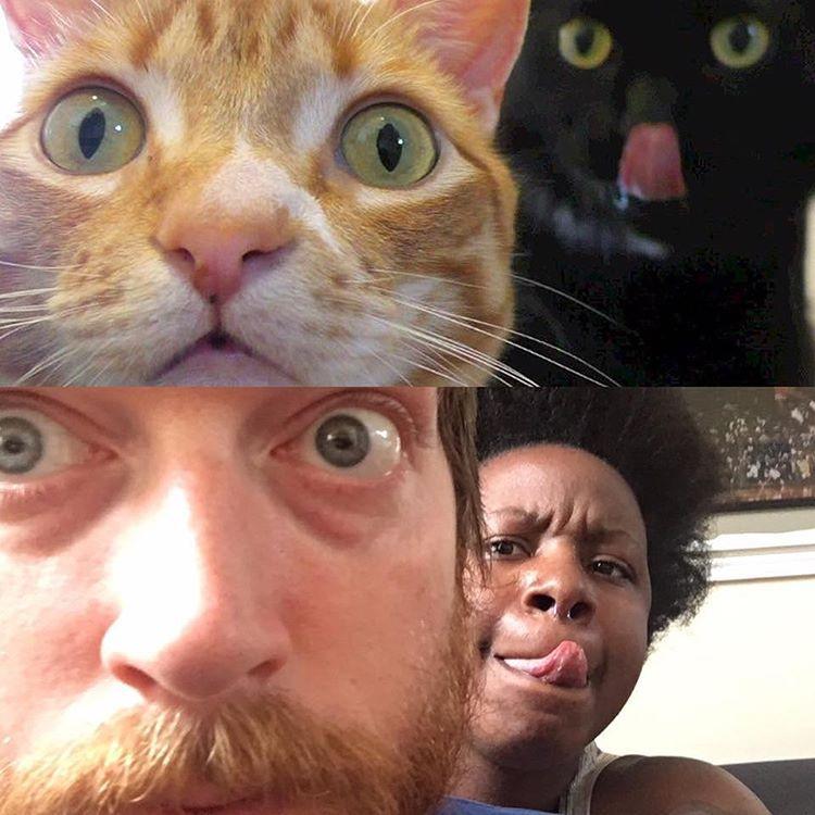рыжий кот и белый кот