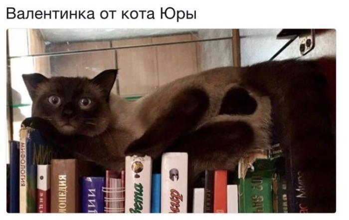 Валентинка от кота Юры