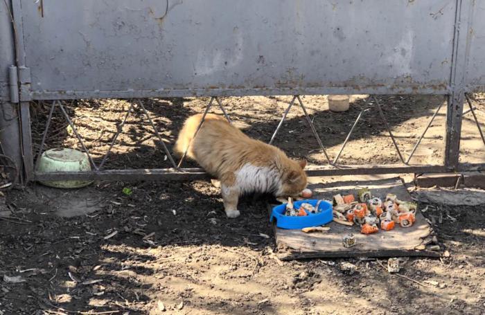 Любят ли коты суши?