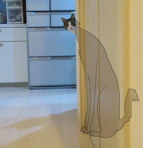 Реальные размеры кота