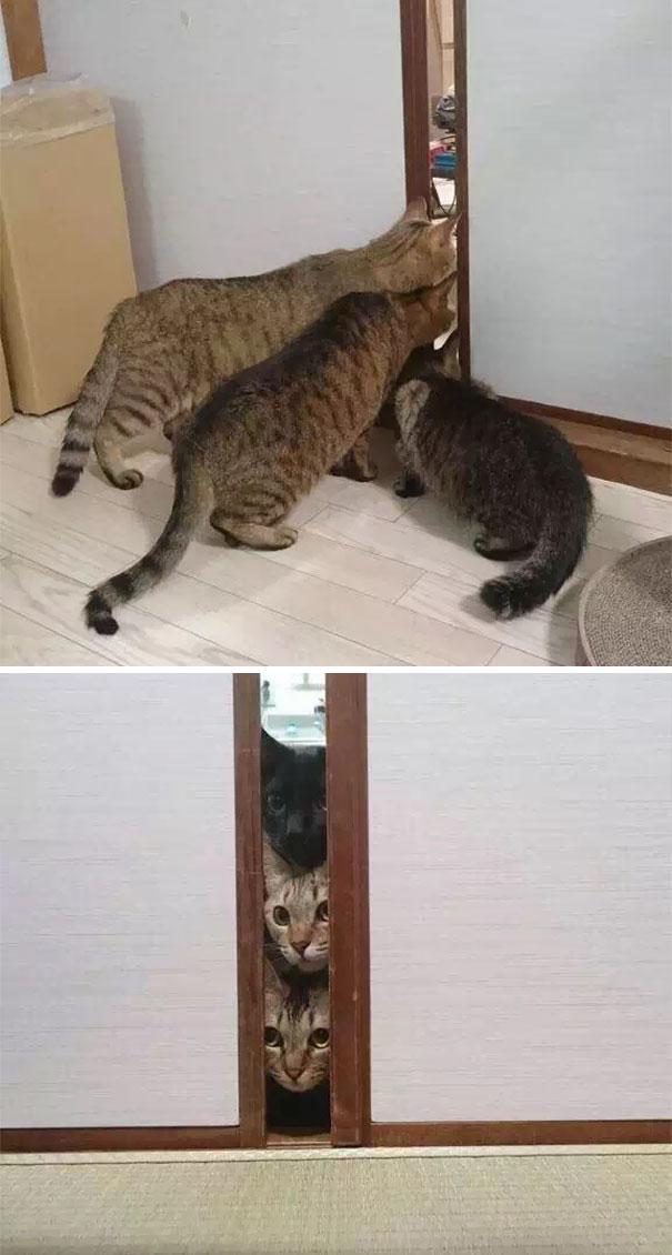 Котє набюдае