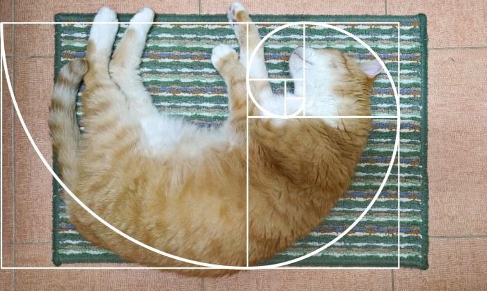 Мало кто знает, но у Фибоначчи был кот