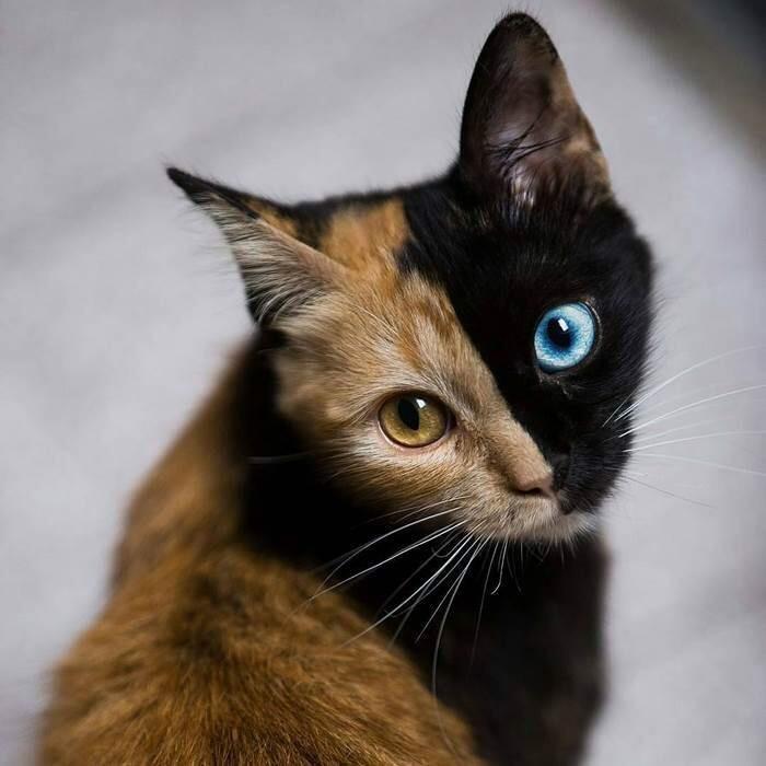 На вкус и цвет все коты разные