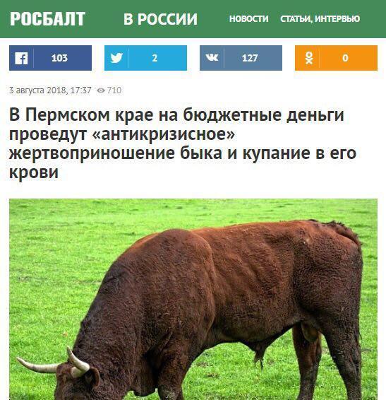 антикризисное жервоприношение быка