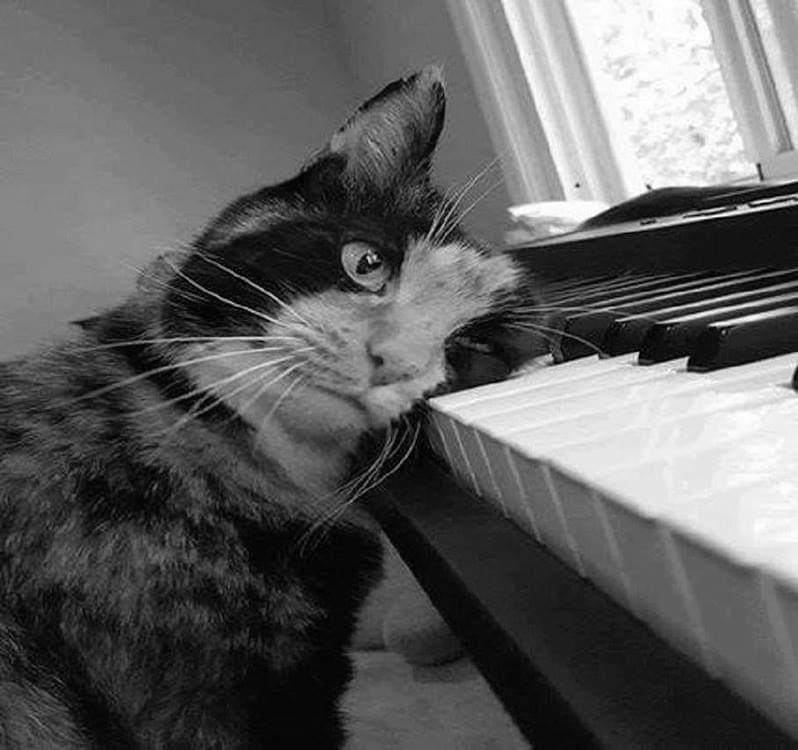 Кот с музыкальным слухом