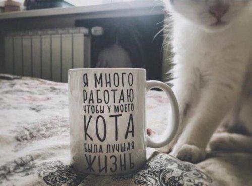 Кружка для кота