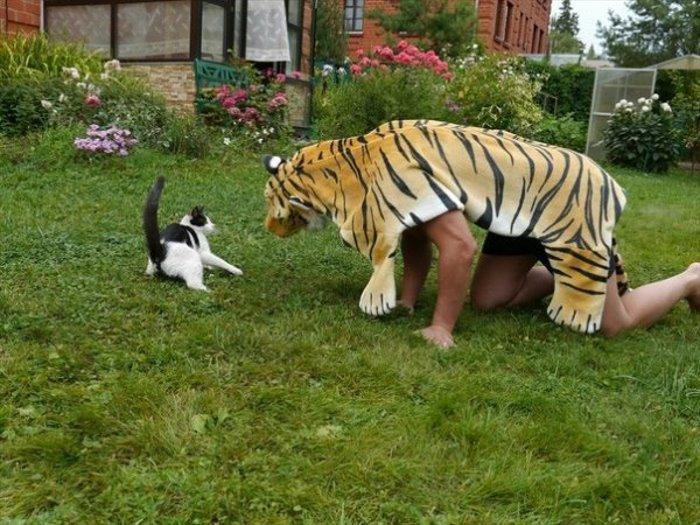 Как испугать кота