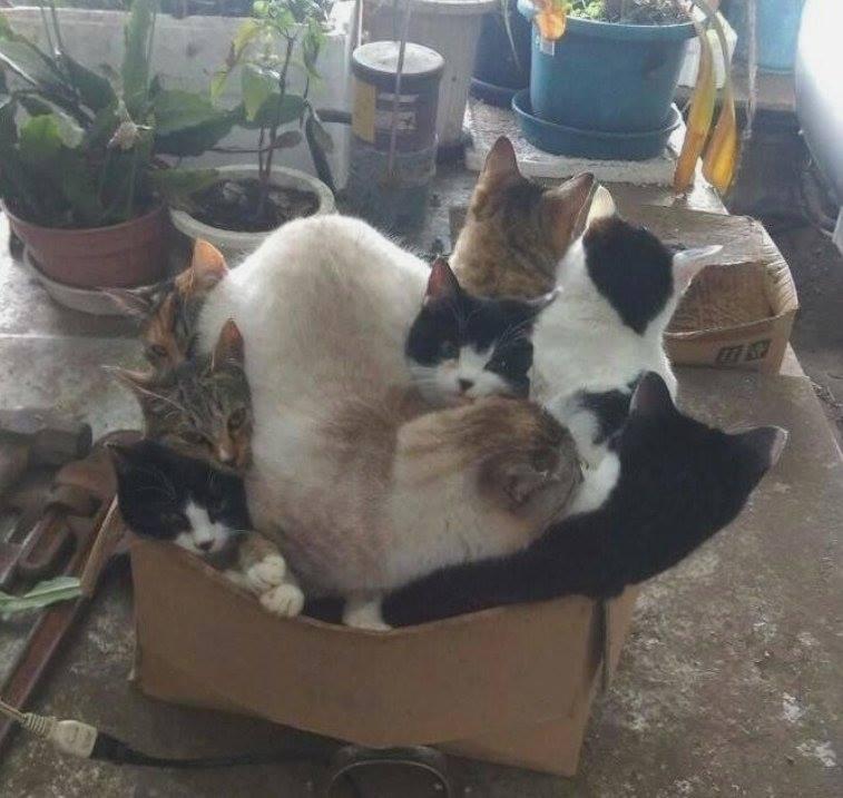 кошачья маршрутка