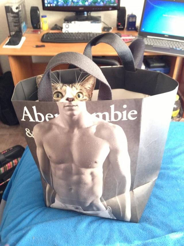 прикольный кот в пакете, приколы про пакеты, приколы про котов