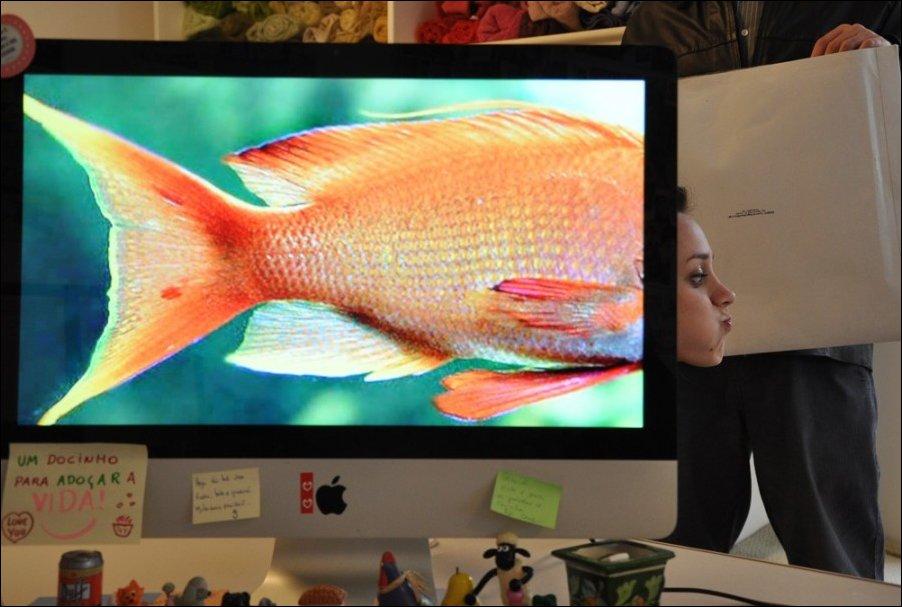 офисный аквариум, дешево и сердито