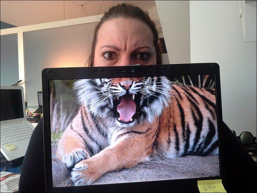 тигр, злющий шо капец