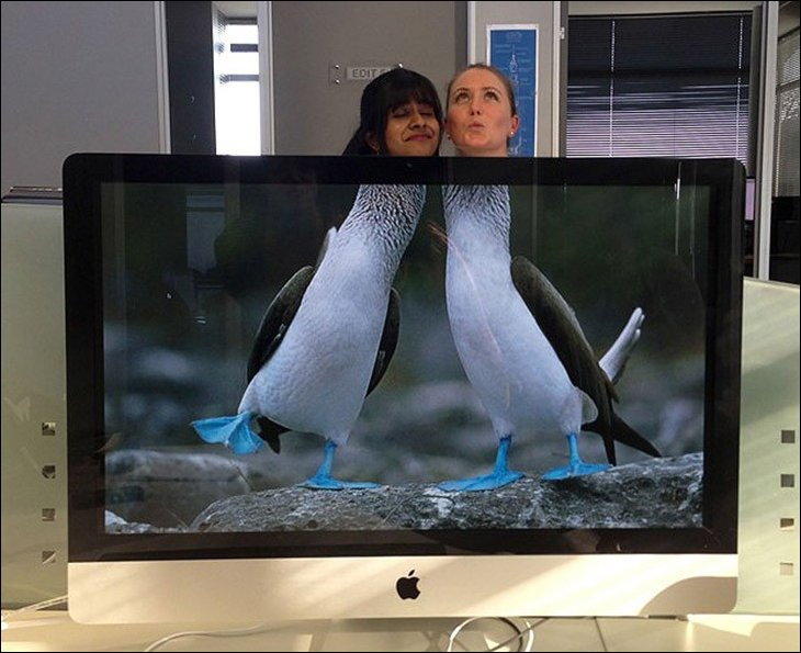 То ли утки, то ли пингвины в офисе