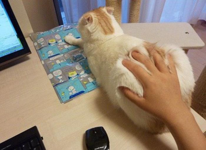 Компьютерная кошь