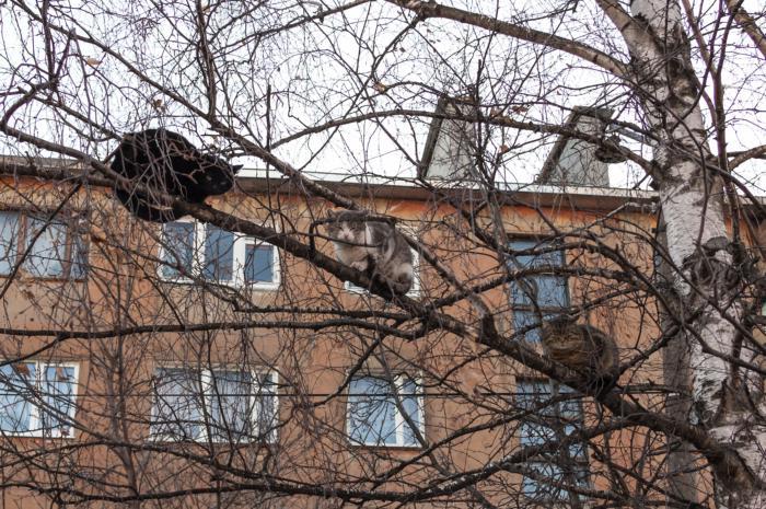 Коты прилители