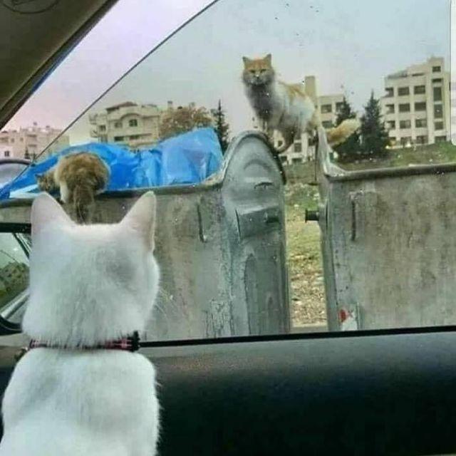 богатый и бедный кот
