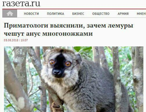 Приматологи выяснили зачем лемуры