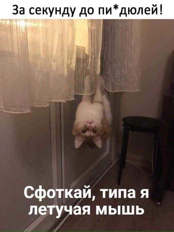 Как правильно фотографировать кота