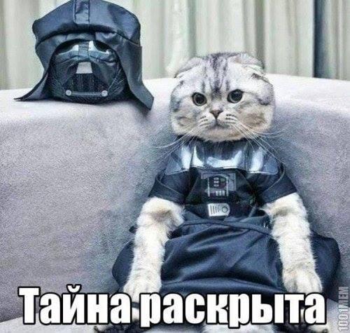 Кот на темной стороне силы